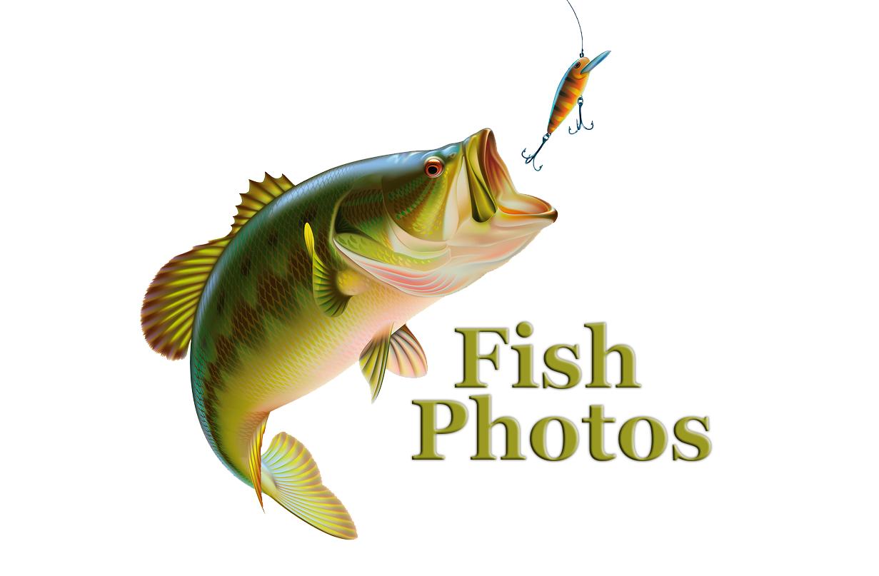 fish-photos-2.png