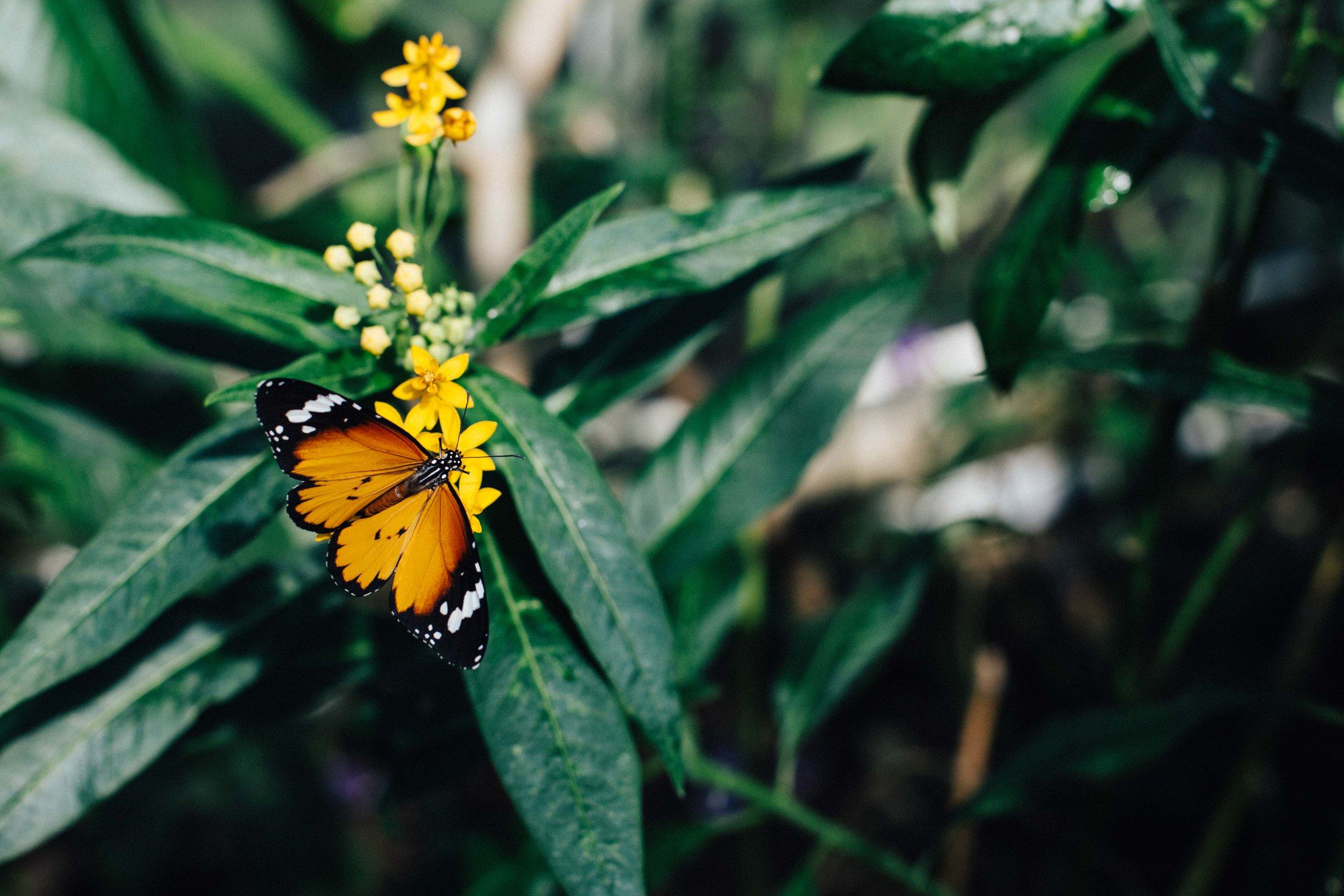 Butterfly in Butterfly House, Horniman Museum, Forrest Hill, London