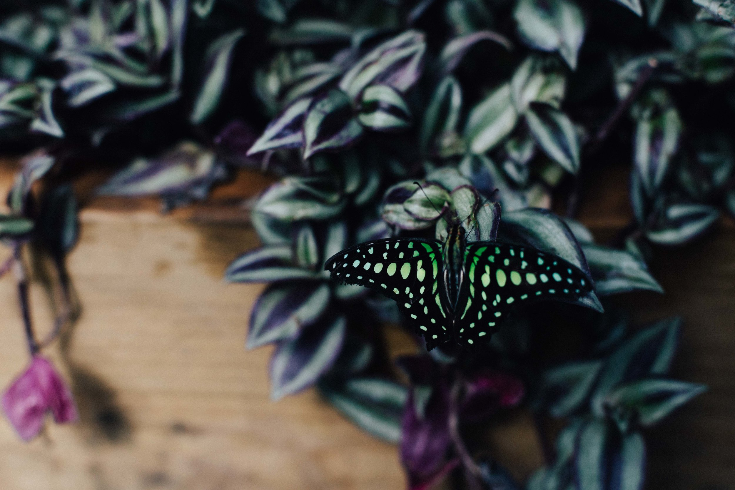 Butterfly at Butterfly House, Horniman Museum, Forrest Hill, London