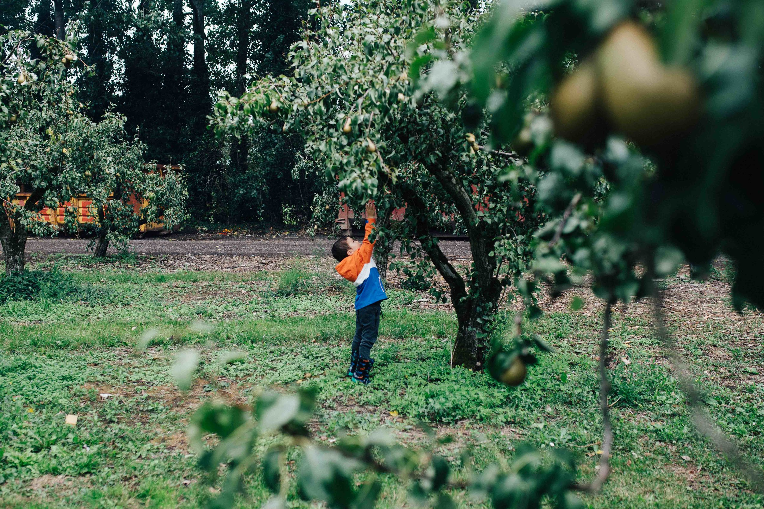 Little boy trying to grab a fruit in a tree