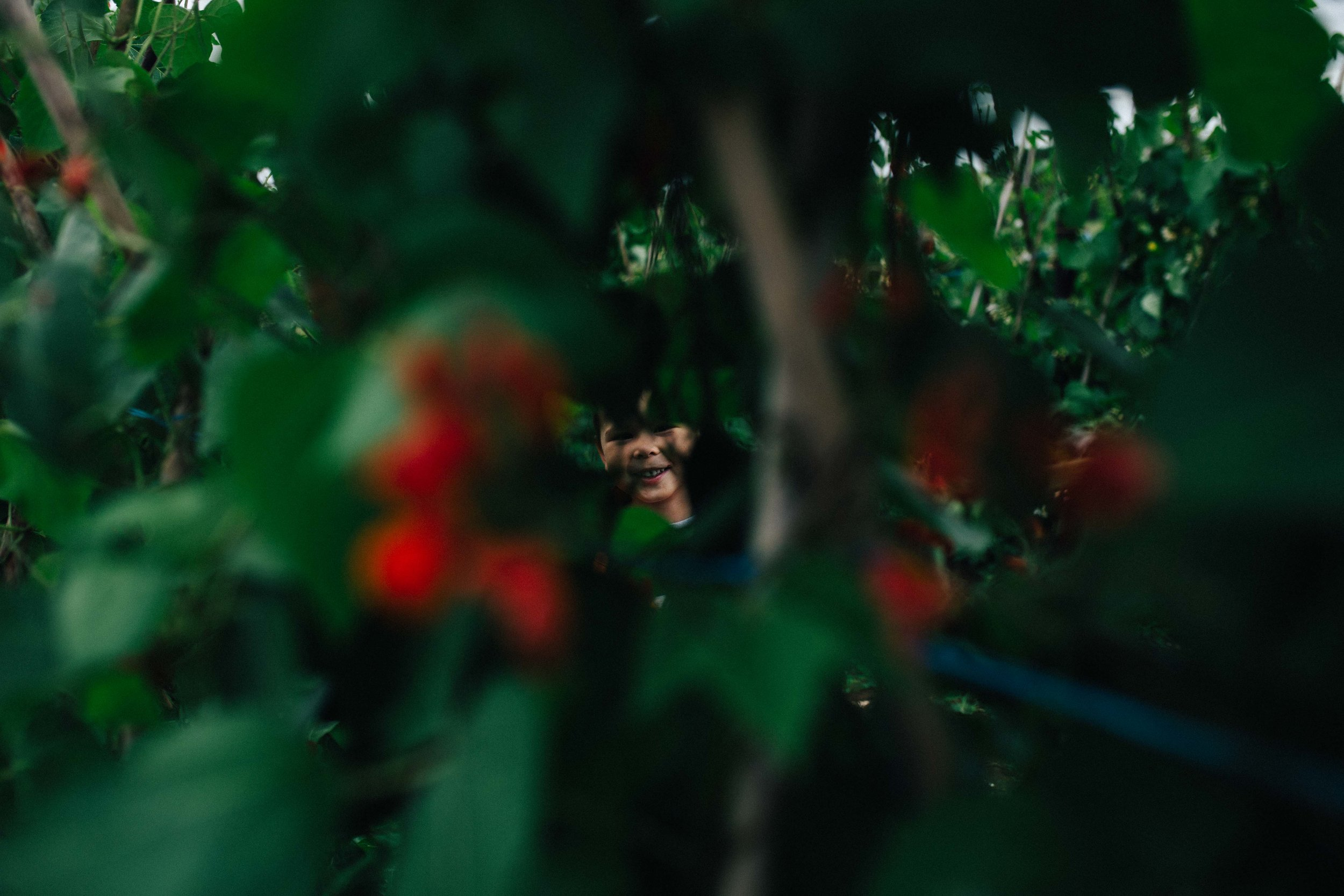 Child smiling and hiding behind plants