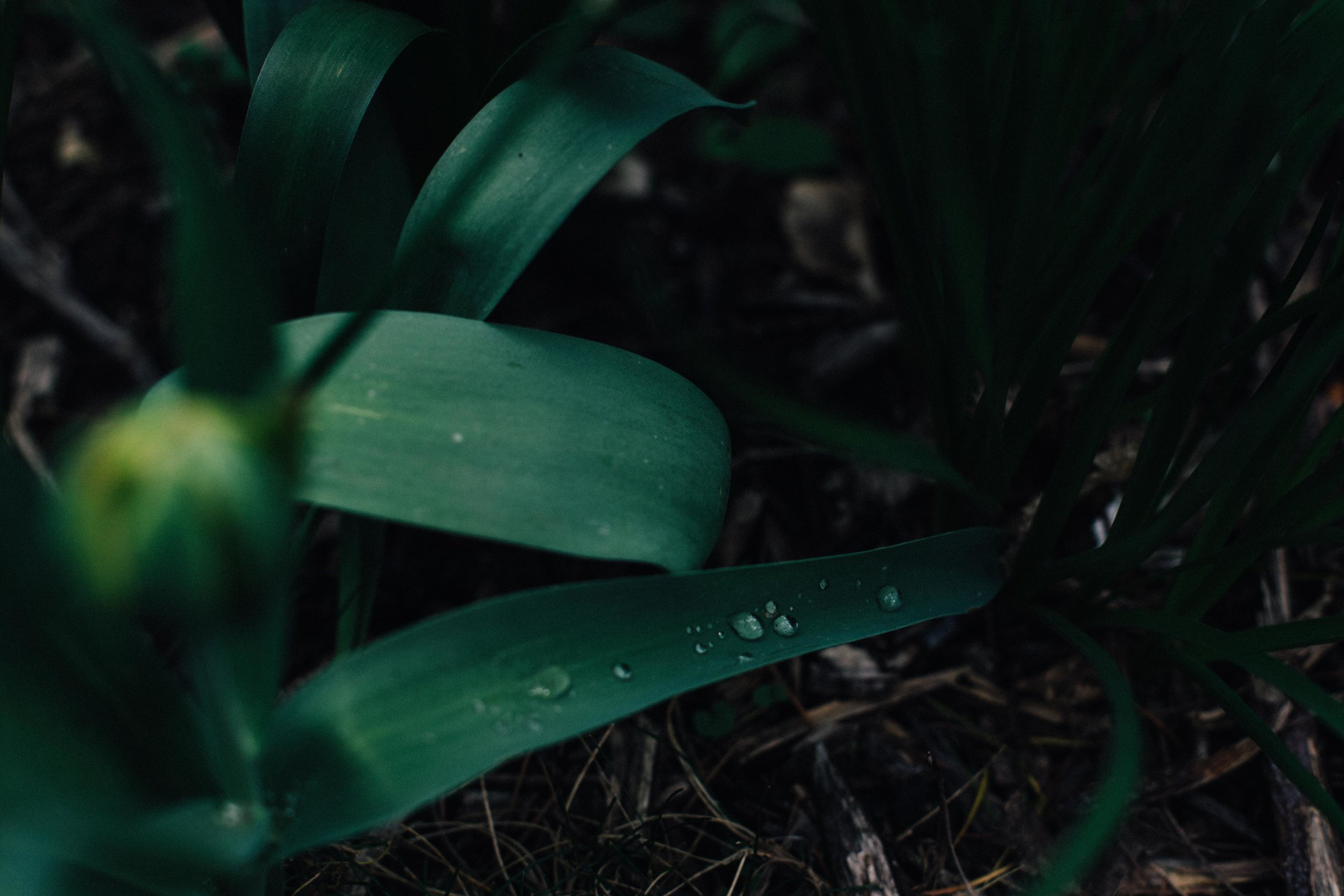 Details of water drops on plant