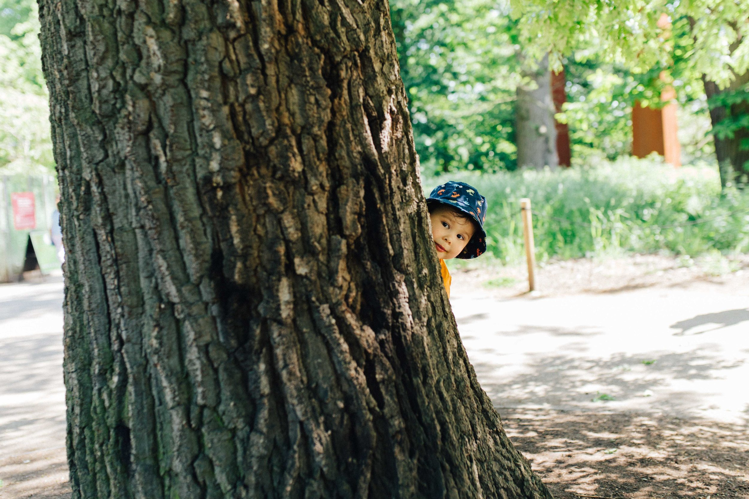 Portrait of boy hiding behind a tree in Kew Gardens, London, during family photoshoot