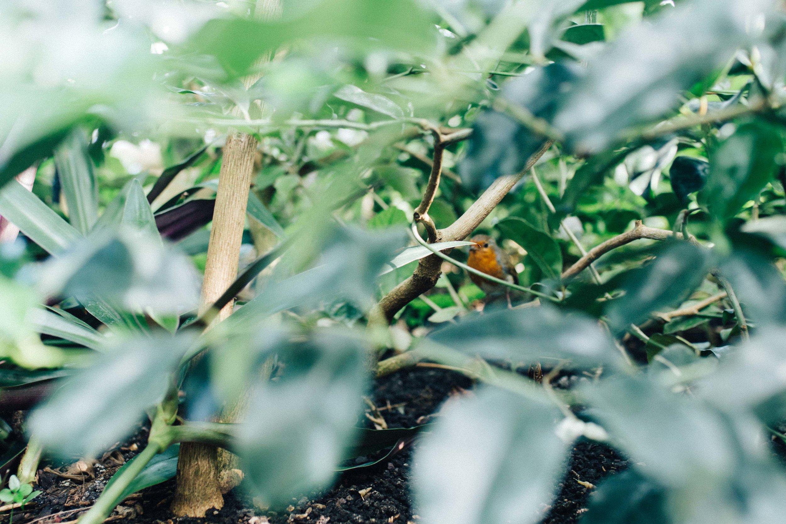 Robin spotted amongst plants in Kew Gardens, London