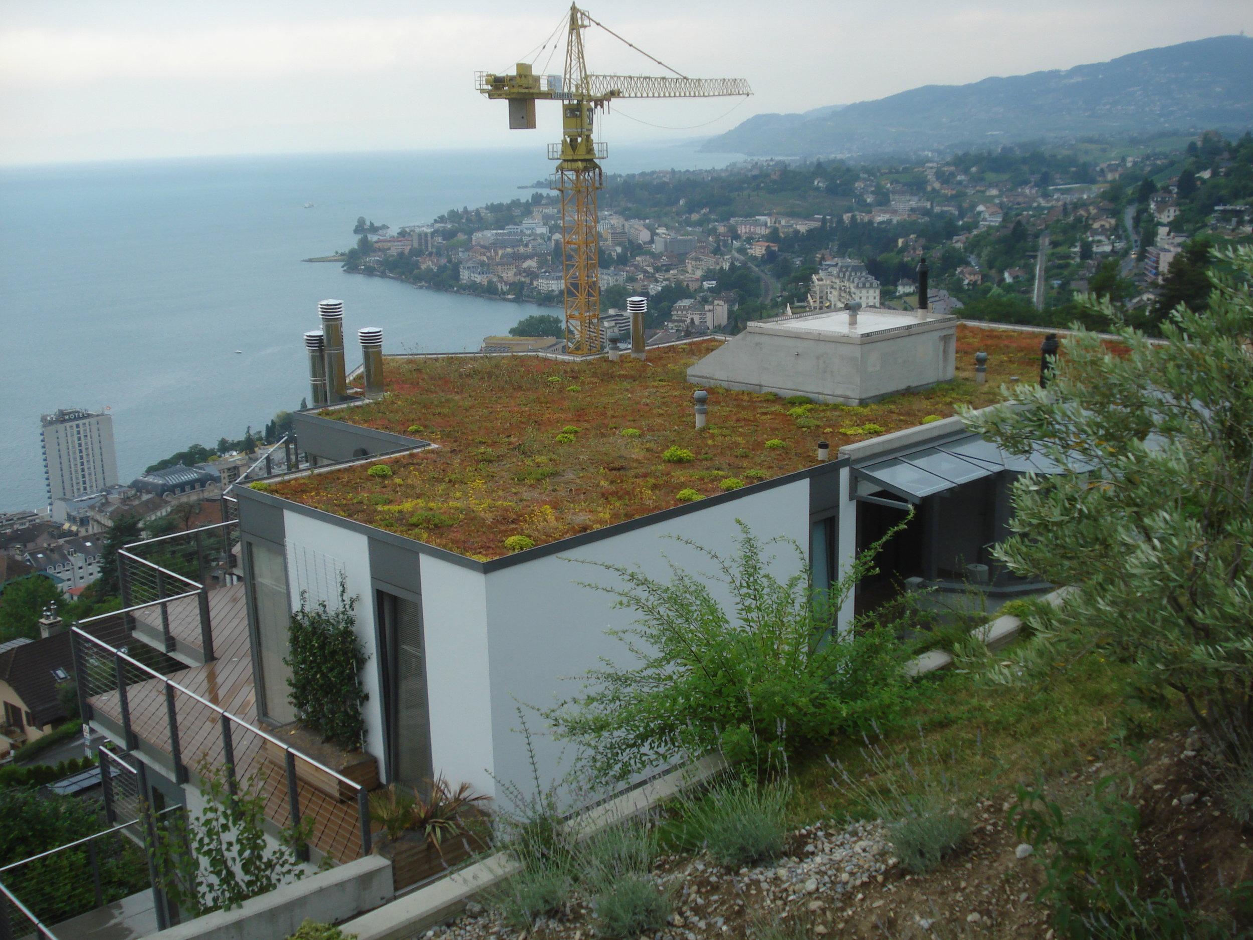 green-roof-france.jpg