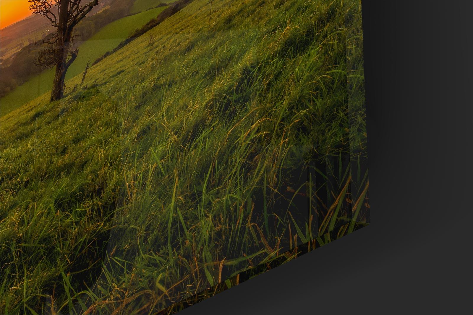 Culver Down Closeup.jpg