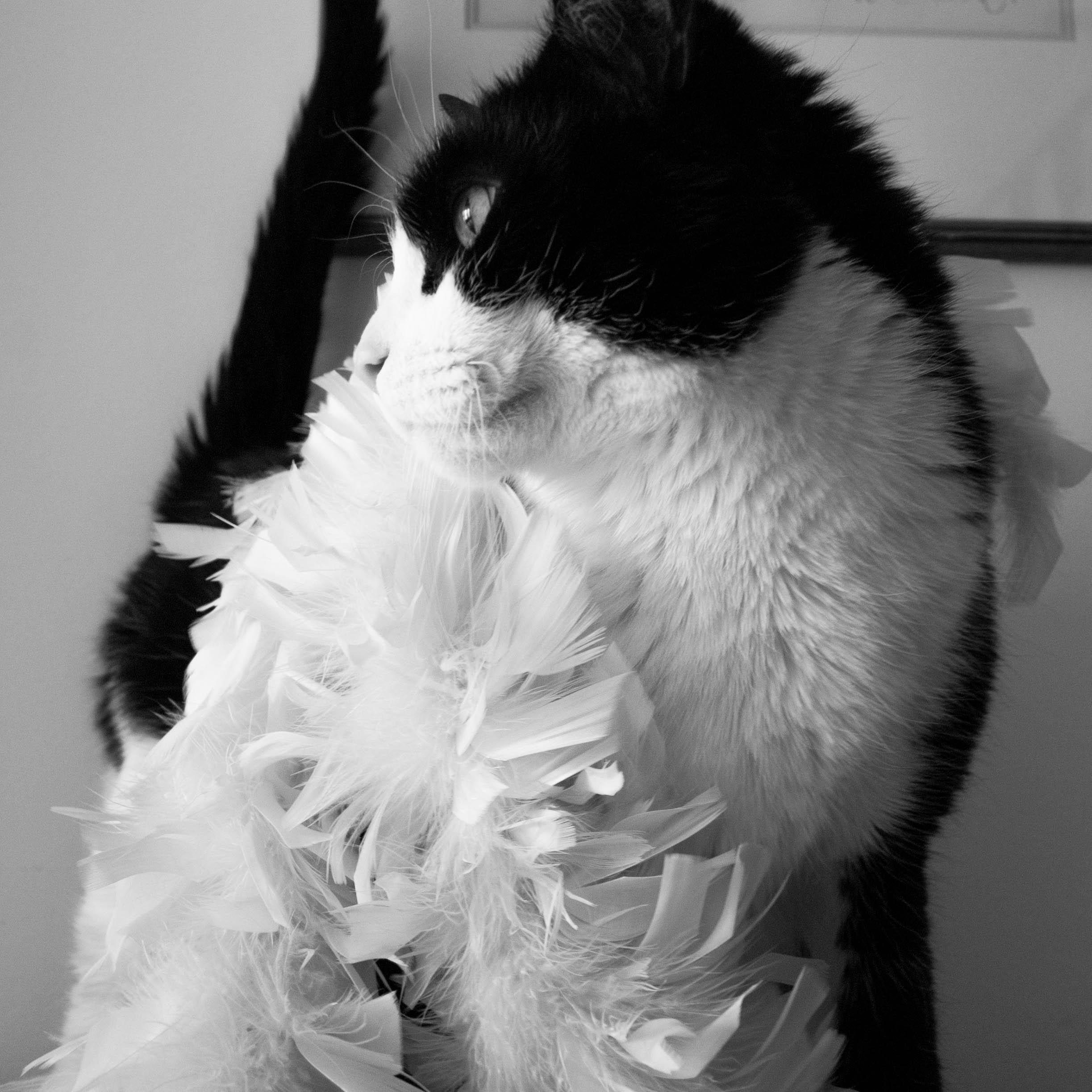 Kitty-1.jpg