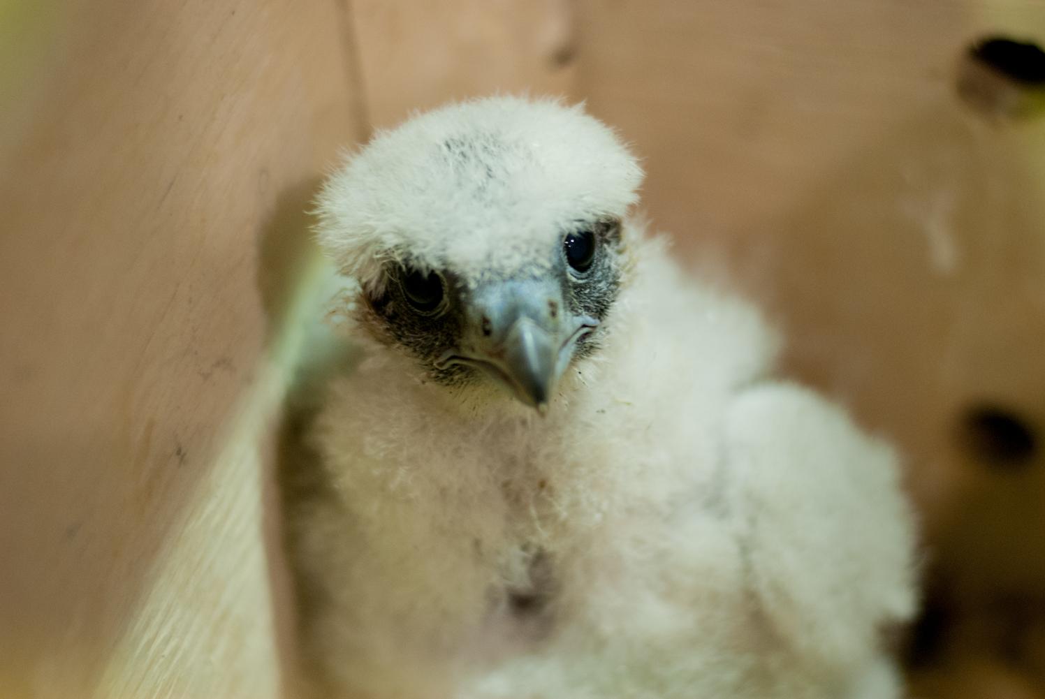 falcon-11.jpg