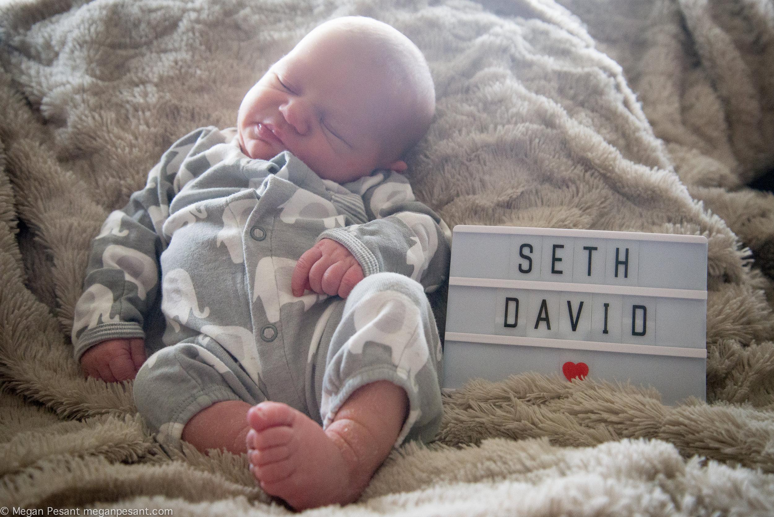 Seth3.jpg