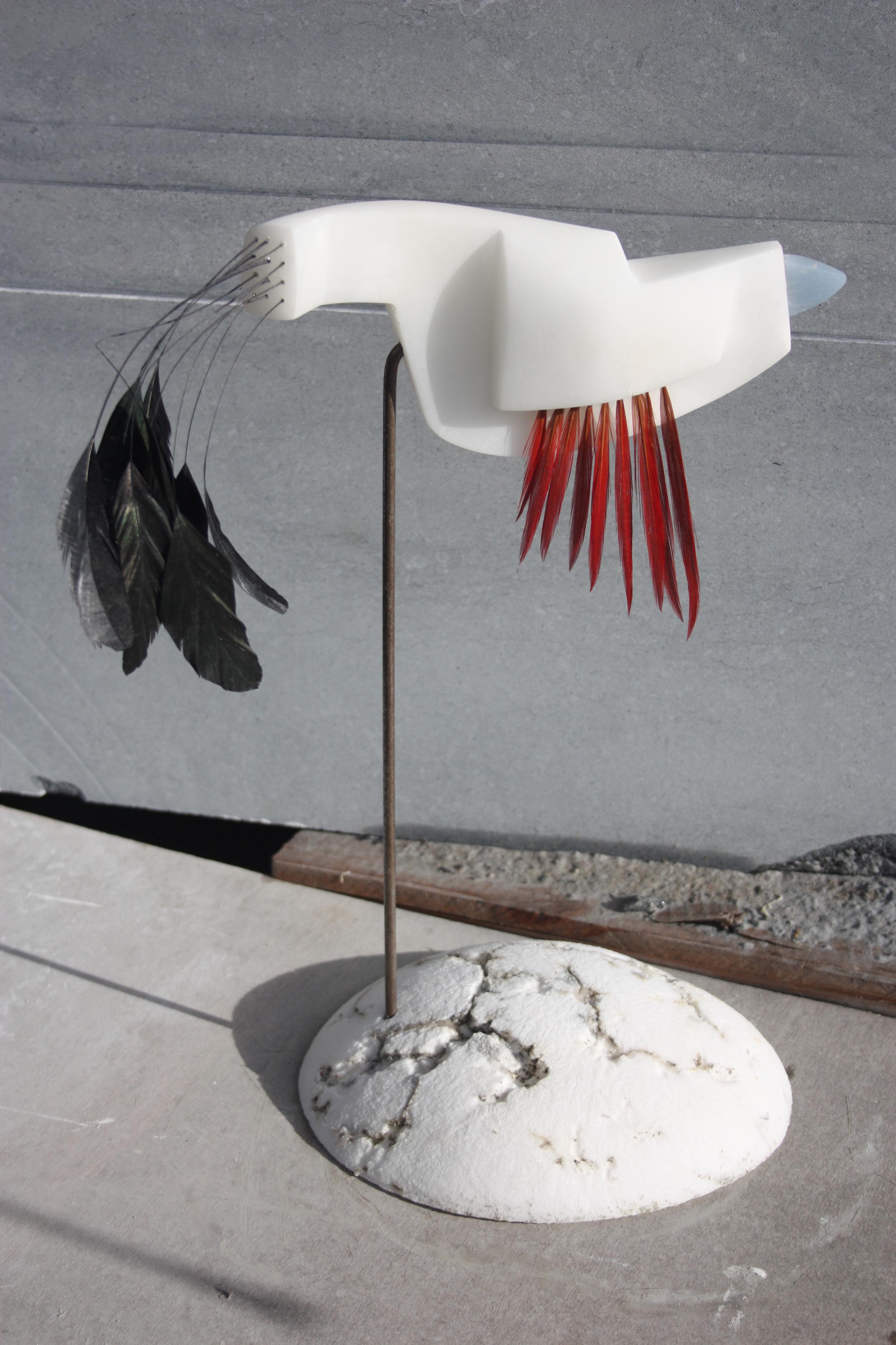 Bird of play