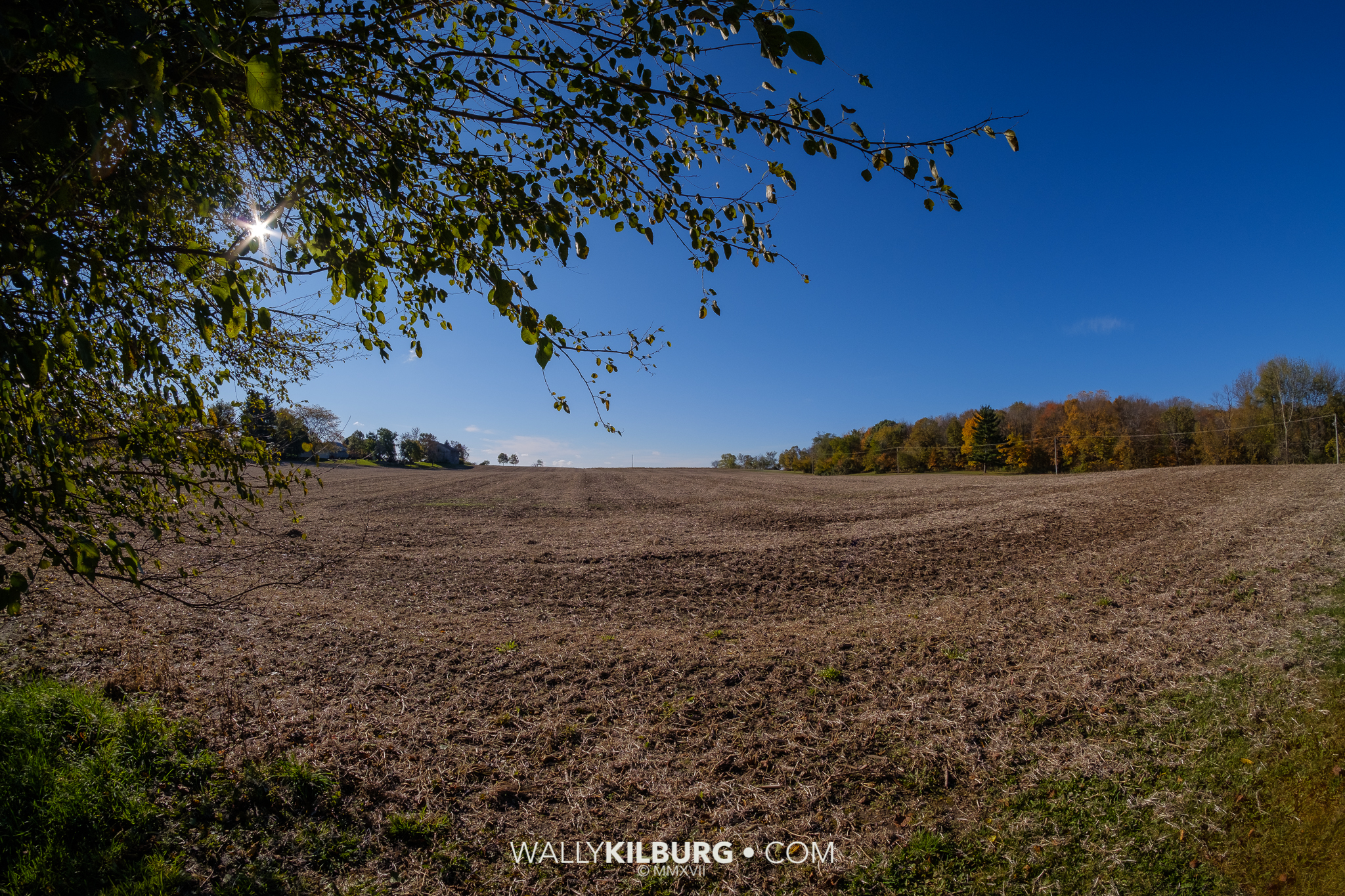 Freshly harvested soybean field next to my house