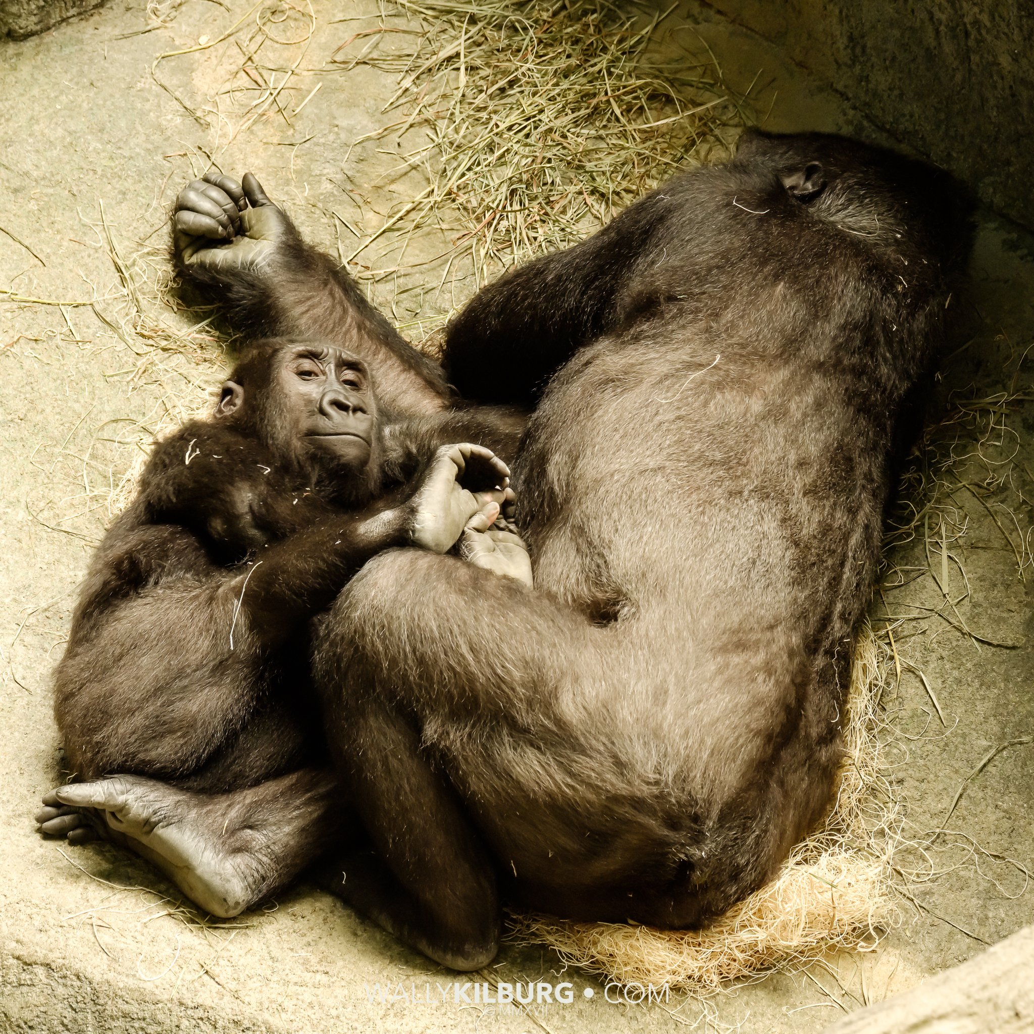 Momma and baby at the Zoo.