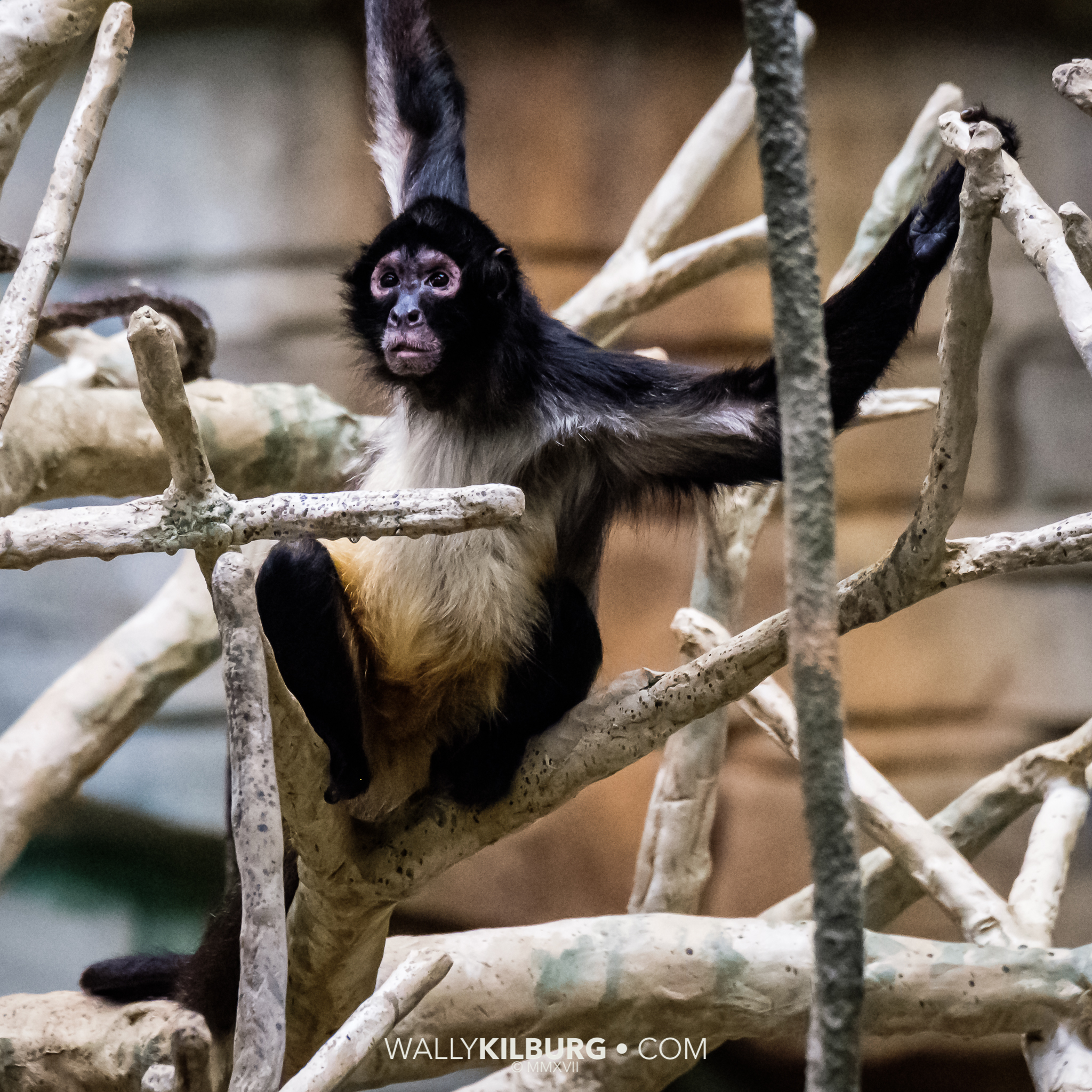 This is an ISO 12,800 shot inside the Monkey House at the Zoo.