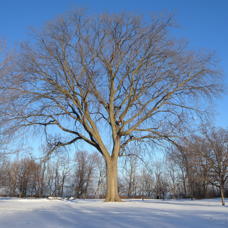 Arborsmith_Winter.jpg