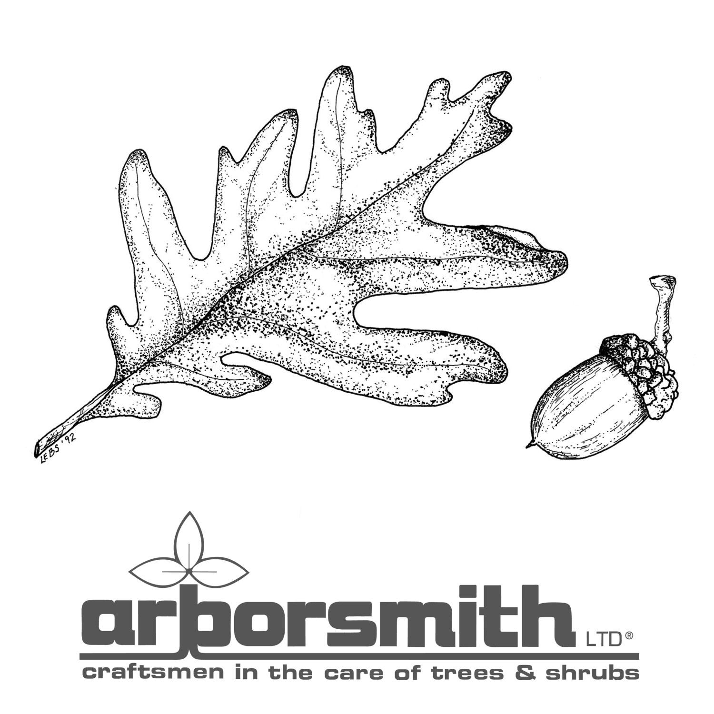 Arborsmith_OakLeafAcorn.jpg