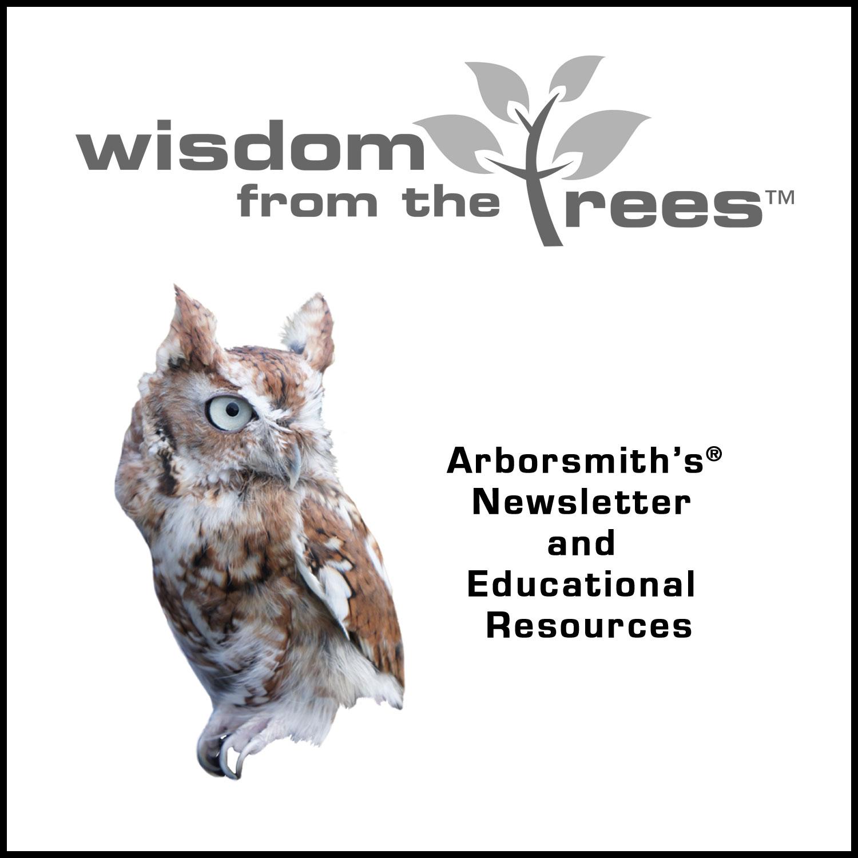 Arborsmith_NorwayMaple.jpg