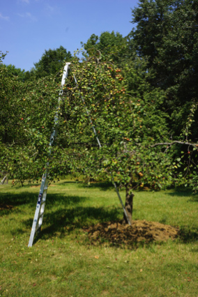 AppleOrchard_Arbormsith.jpg