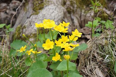 Wildflowers05.jpg