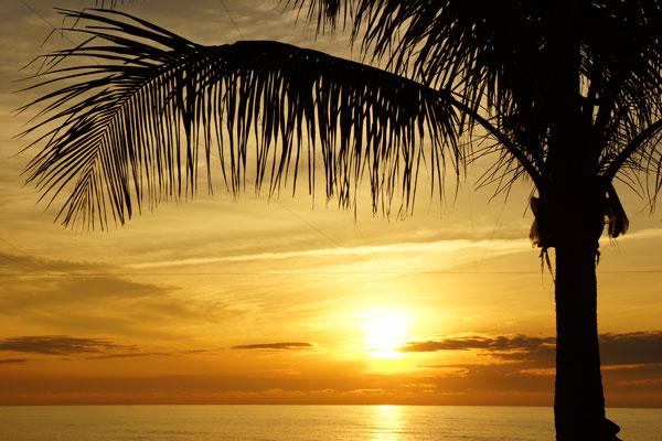 Palm by Lesley Bruce Smith