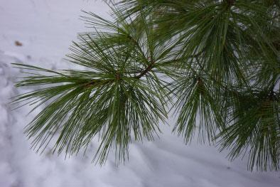 TreeOfTheMonth2W.jpg