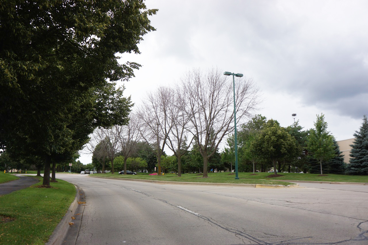 Dead Ash trees along a boulevard in Vernon Hills