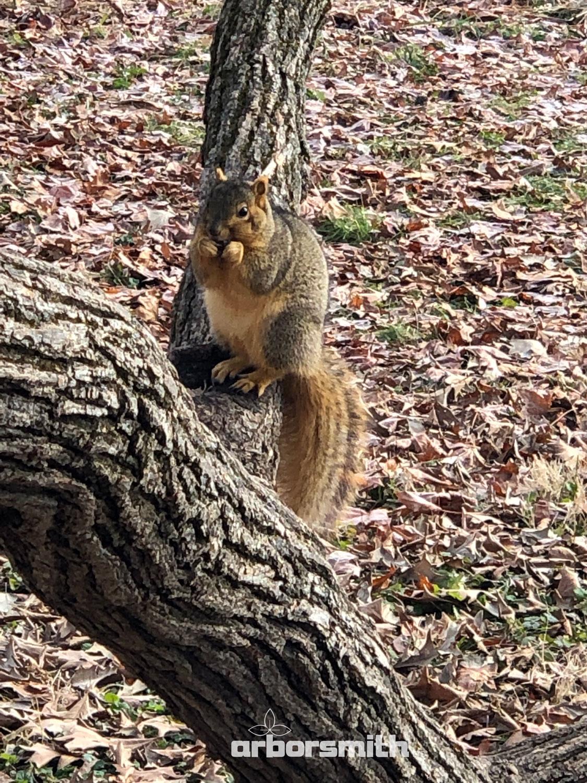 Squirrel-arborsmith.jpg