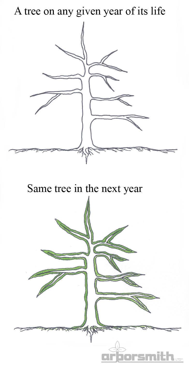 How-Do-Trees-Grow-illustration.jpg