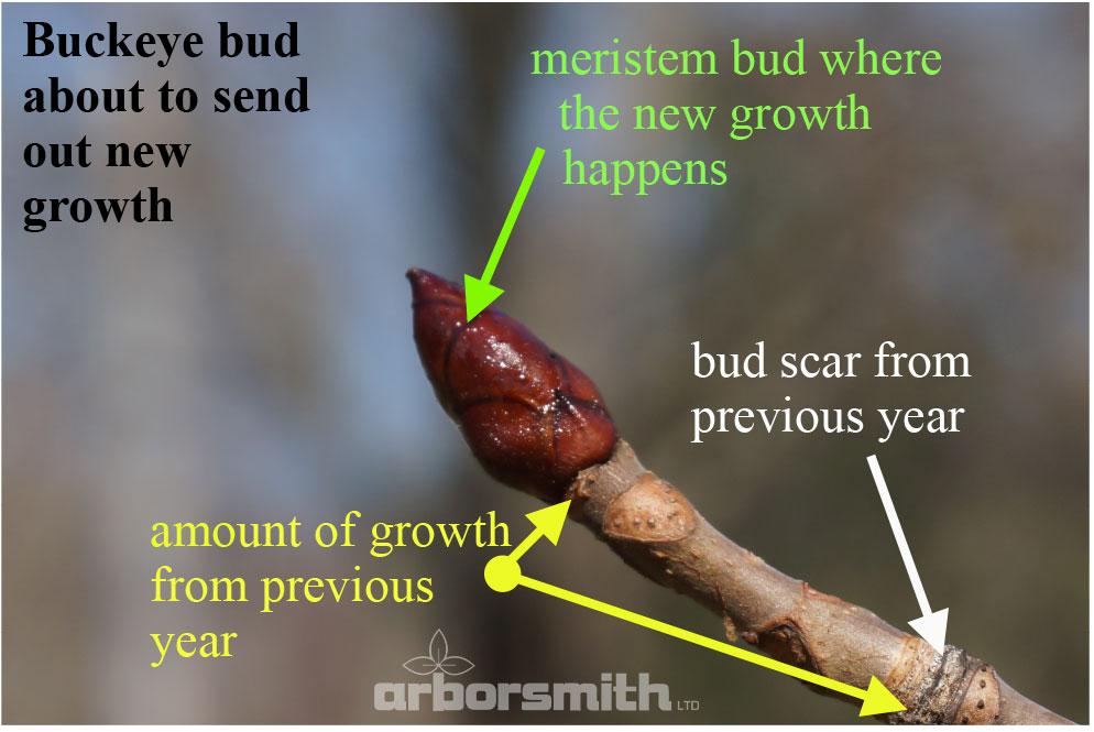 How-Do-Trees-Grow-2.jpg