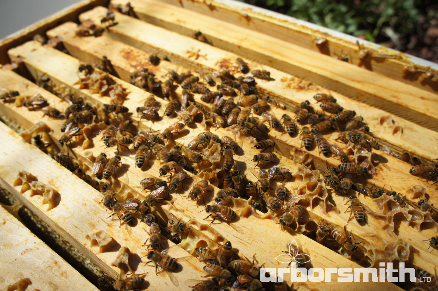 Honeybee hive.  Photos by Lesley Bruce Smith