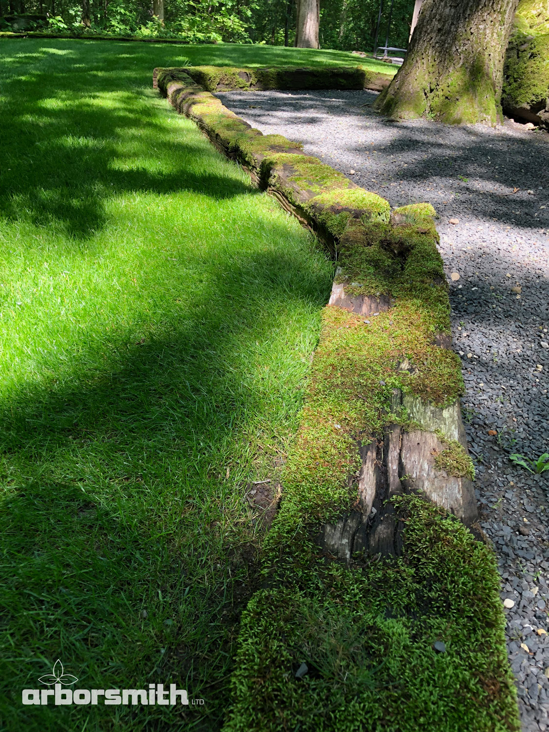 Moss In My Landscape Arborsmith Ltd Crafstman In The Care Of
