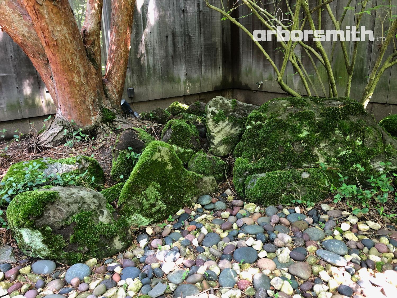 Moss garden or fairy play land?  Photo by Gilbert A. Smith