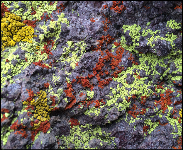 Lichen / Science