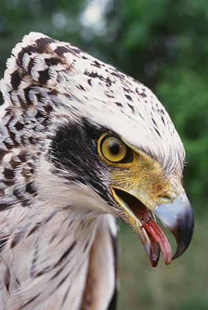 raptor4.jpg