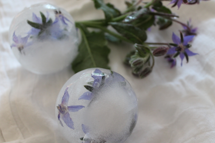 Spheres of ice with Borage flowers also known as Star flower!