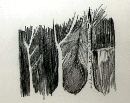 cat-trees.jpg