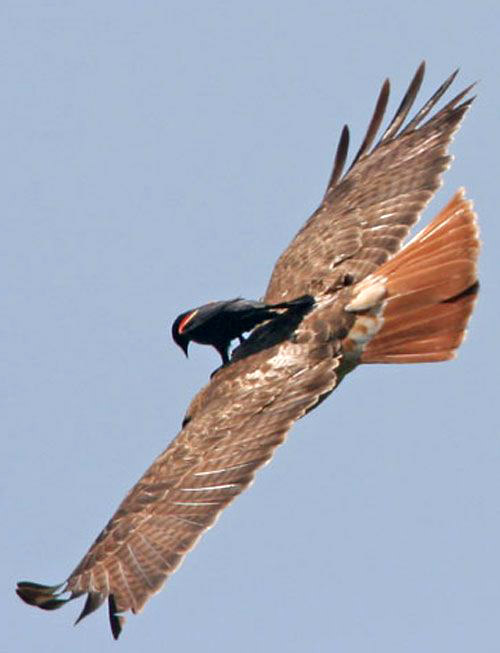 bird on bird.jpg