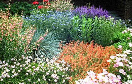 Xeriscape-Flowers.jpg
