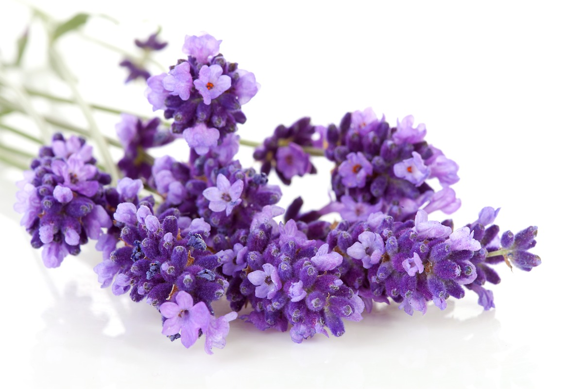 Lavender  is known for its ability to eliminate nervous tension, relieve pain, disinfect the scalp and skin, enhance blood circulation and treat respiratory problems.