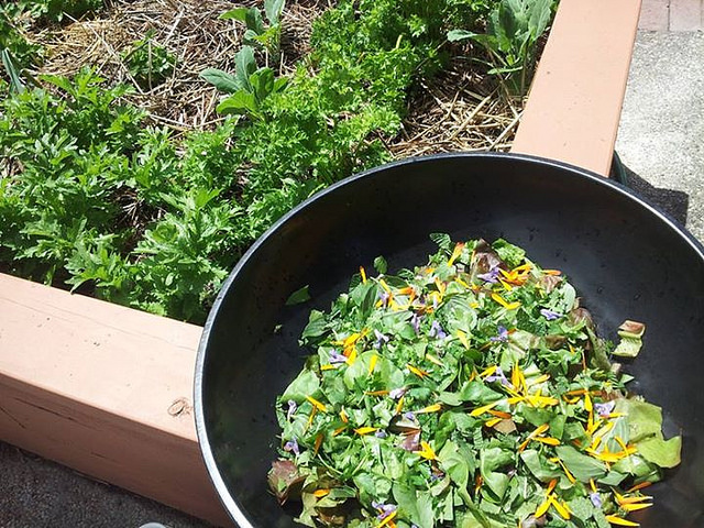 Salad from the garden at City of Refuge United Church of Christ for our salad dressing competition.