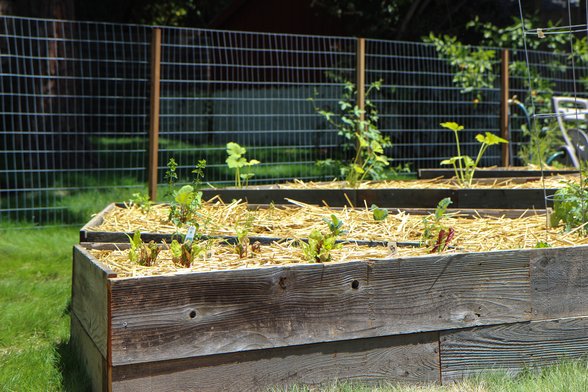 Reclaimed Redwood Raised Beds