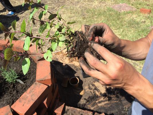 Planting_Hiles_4-533x400.jpg