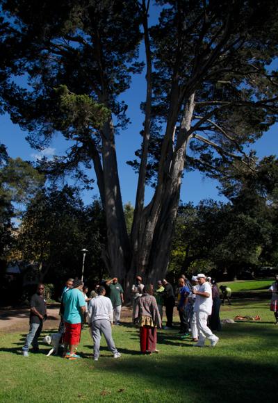 Small-Circle-Tree.jpg