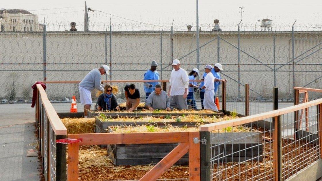 prison-garden_wide-9186c41a6187bd0bad87054d84b519cf88f2cab6-s40-c85.jpeg