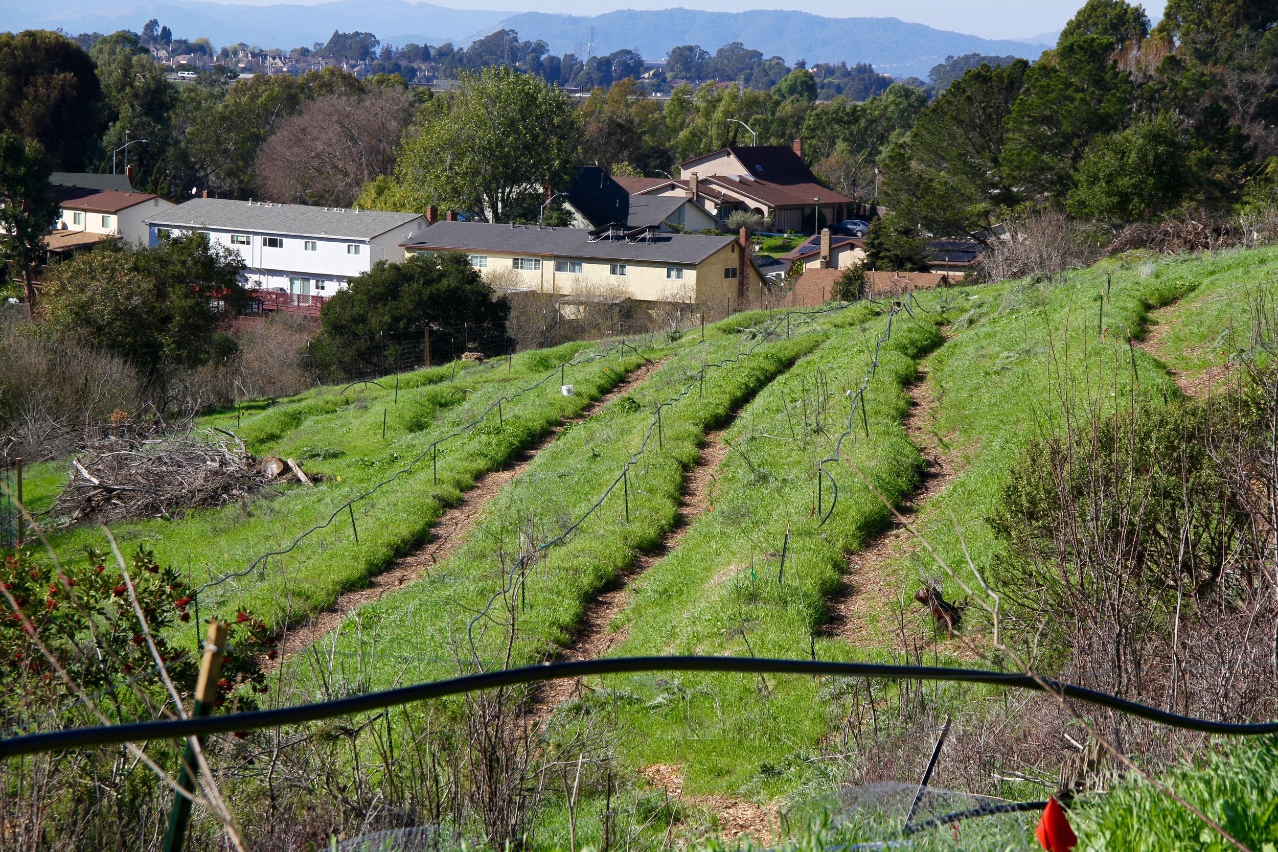 Farm Life image asset