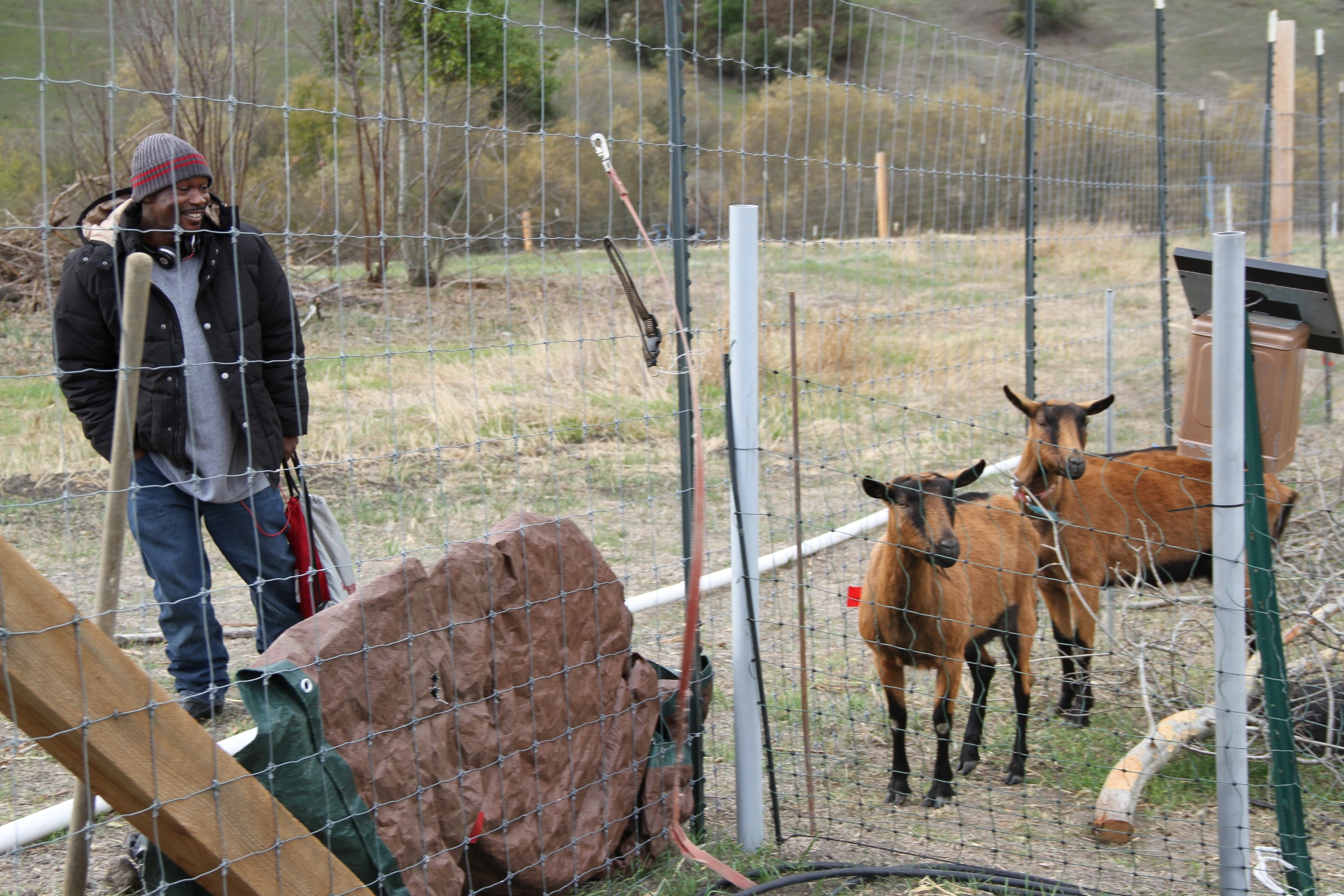 Our newest team member, Bilal, making friends with the goats on his 11th day free after a 20 year prison sentence. This farm is healing for those of us who have been to prison.