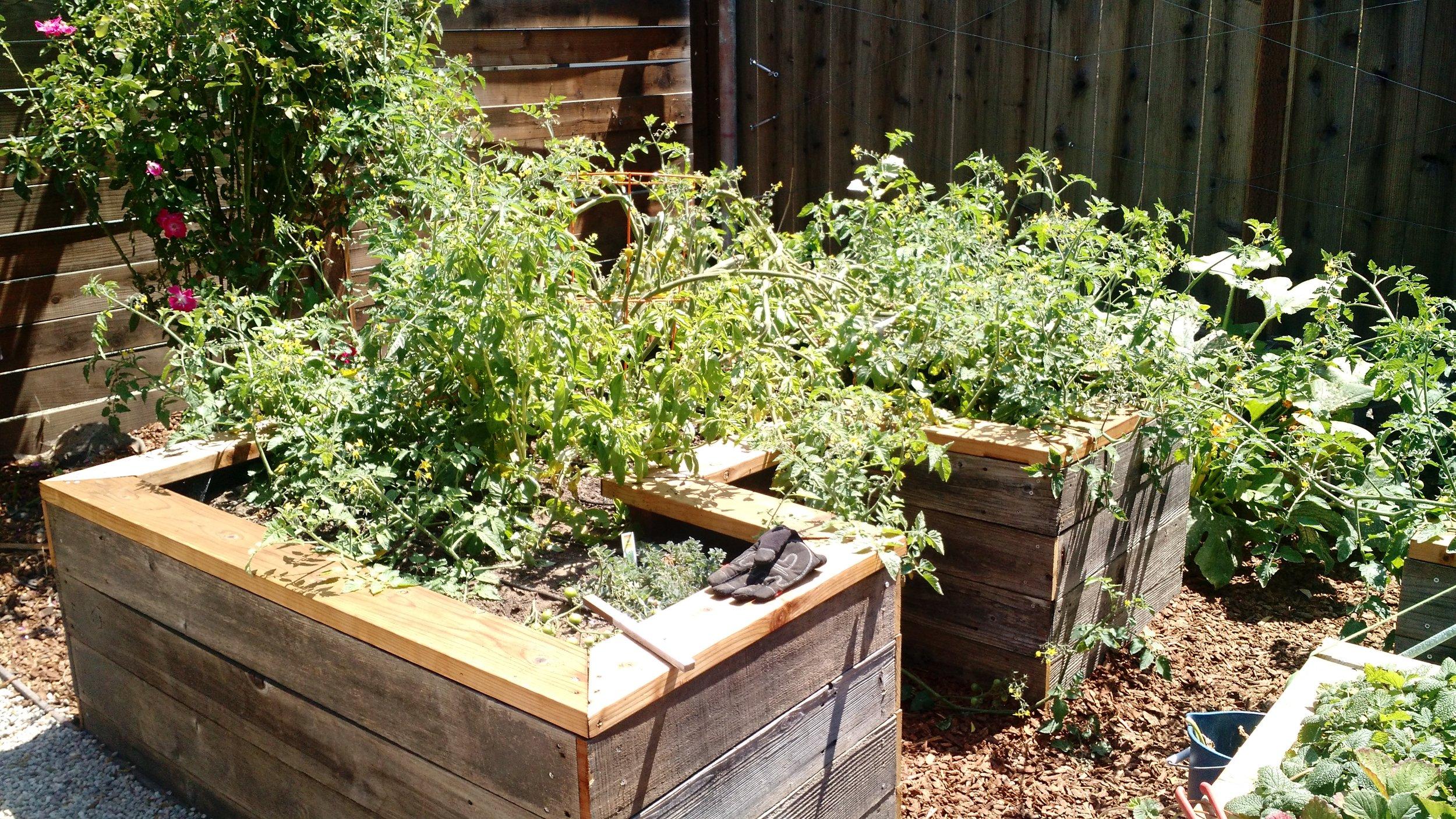 planter boxes in edible TYY garden