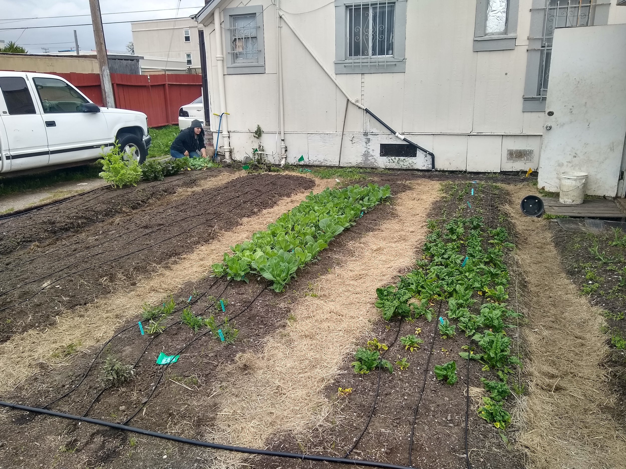 Community Justice Garden Build @ Bay Area Rescue Mission IMG 20190408 151703390 HDR