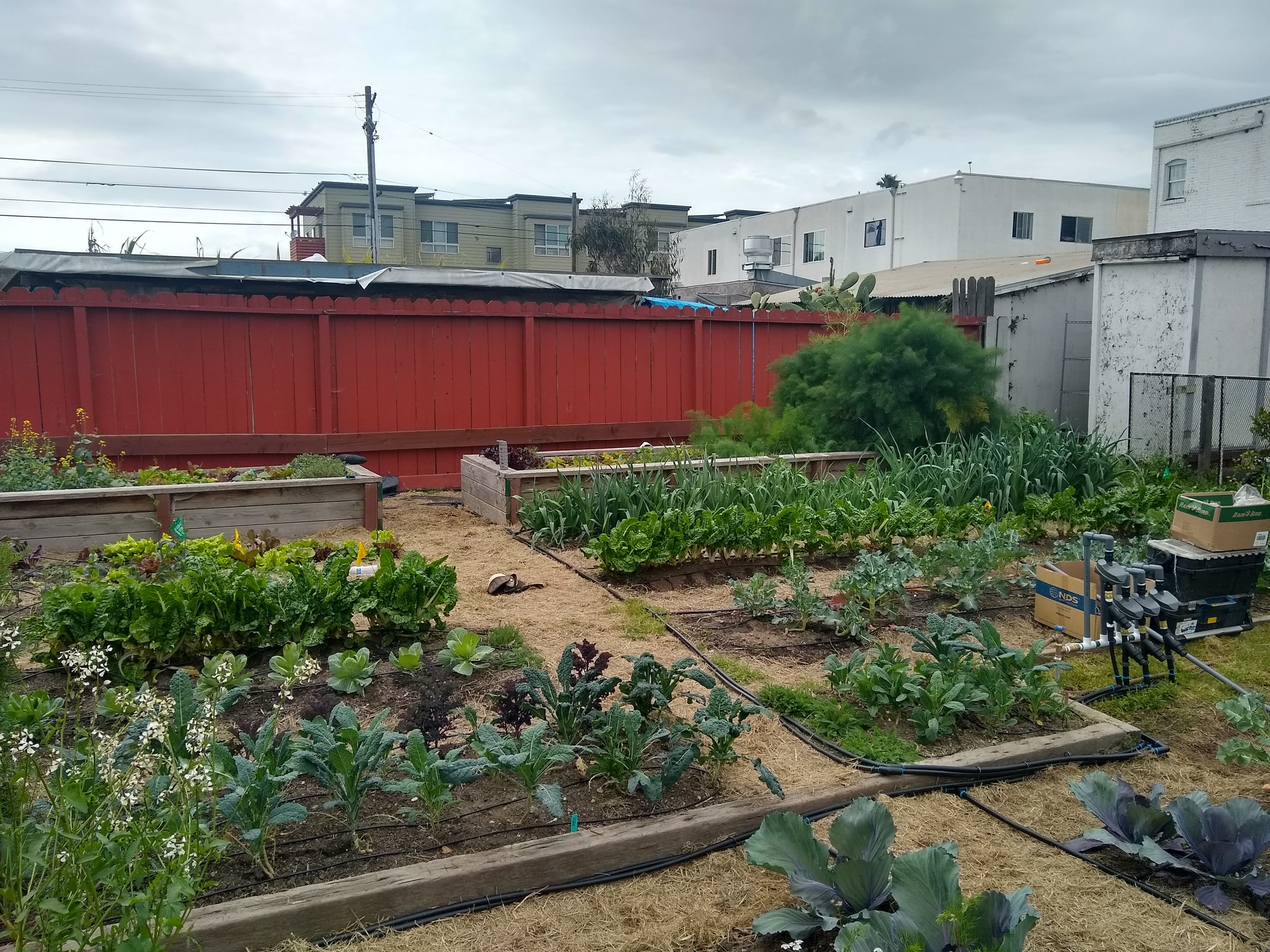 Community Justice Garden Build @ Bay Area Rescue Mission IMG 20190408 151657456 HDR