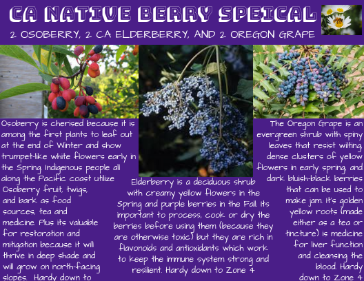 CA Native Berry Special_ Osoberry_ Elderberry and Oregon Grape _1_.png