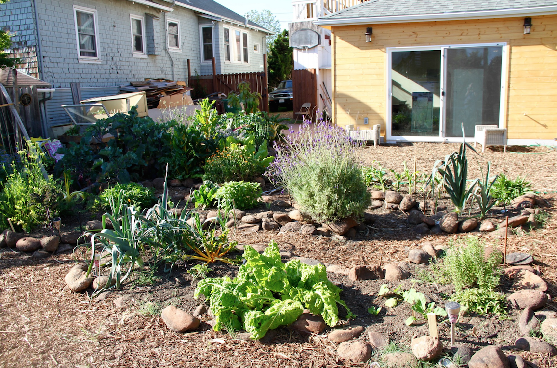 Photo: A Planting Justice permaculture garden in Oakland (occupied territory of the Ohlone people)